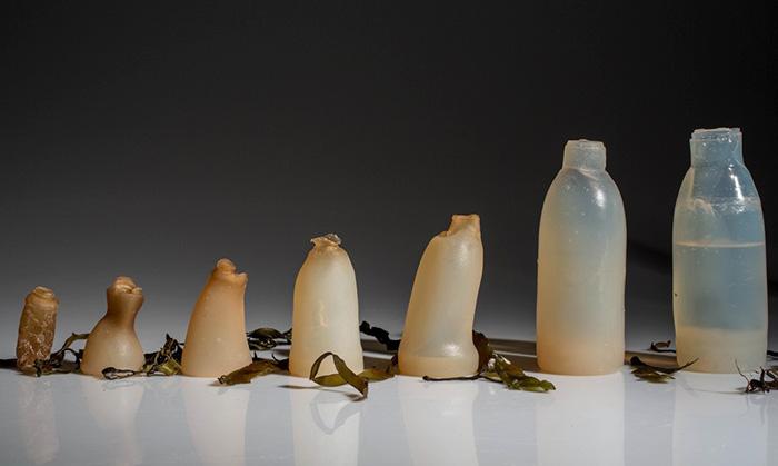 algae bottle