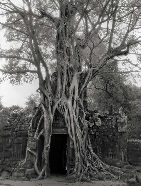 Beth Moon - ROOTED PASSAGE