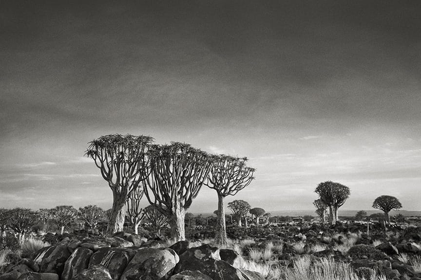 Beth Moon - QUIVER TREE FOREST