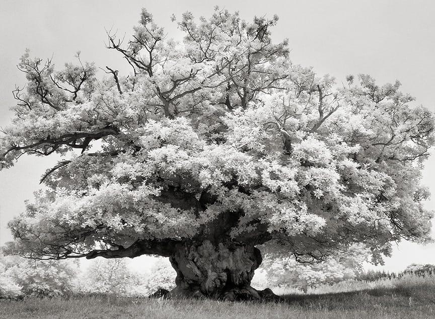 Beth Moon - CHESTNUT IN COWDRY PARK